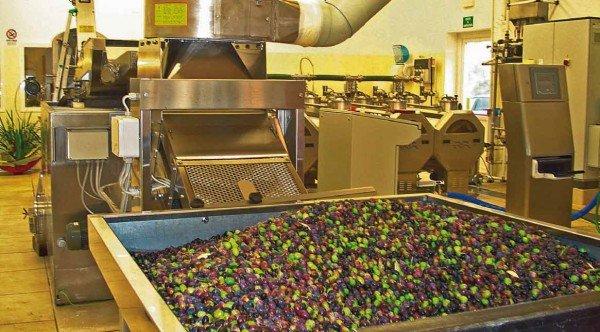 frantoio produzione olio oliva